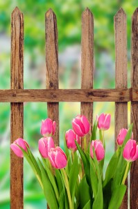 spring wooden fence installation