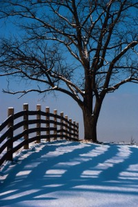 winterize your fence