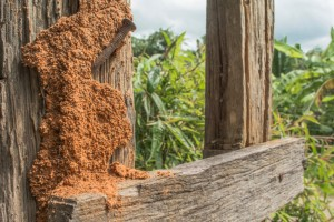 How To Get Rid Of Termites In Your Fences