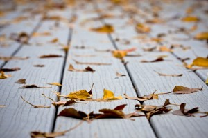 How to Keep Your Deck from Dry Rotting