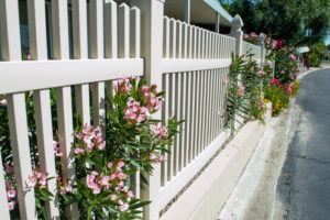 Fences vs. Plants: Which is a Better Border?