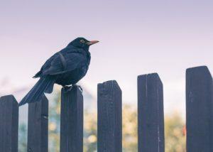 The Best Fence Contractors in Marriottsville