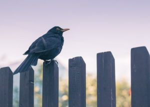 The Best Fence Contractors in Columbia, Maryland