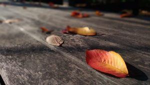 Prepare Your Deck for Fall!