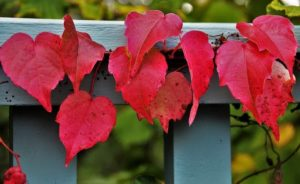 Fall Fence Decorating Ideas